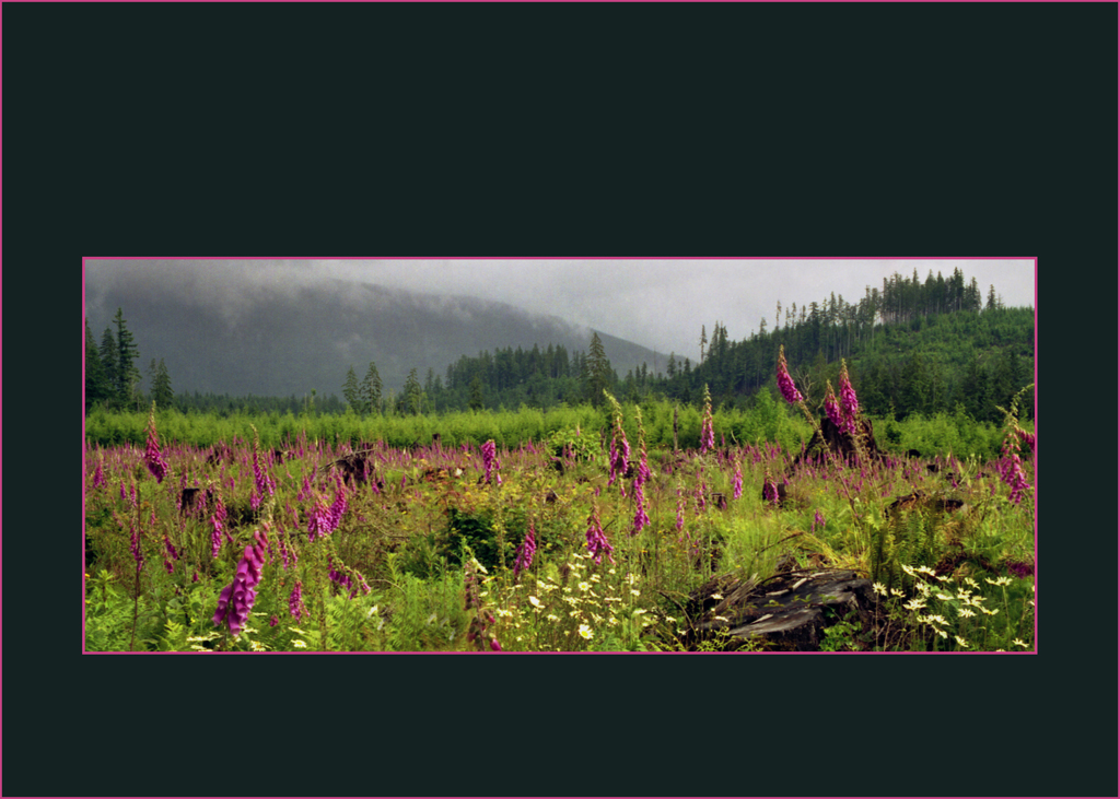 mysticmeadow on black with border